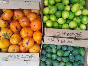 Хурма, лимоны и фейхоа